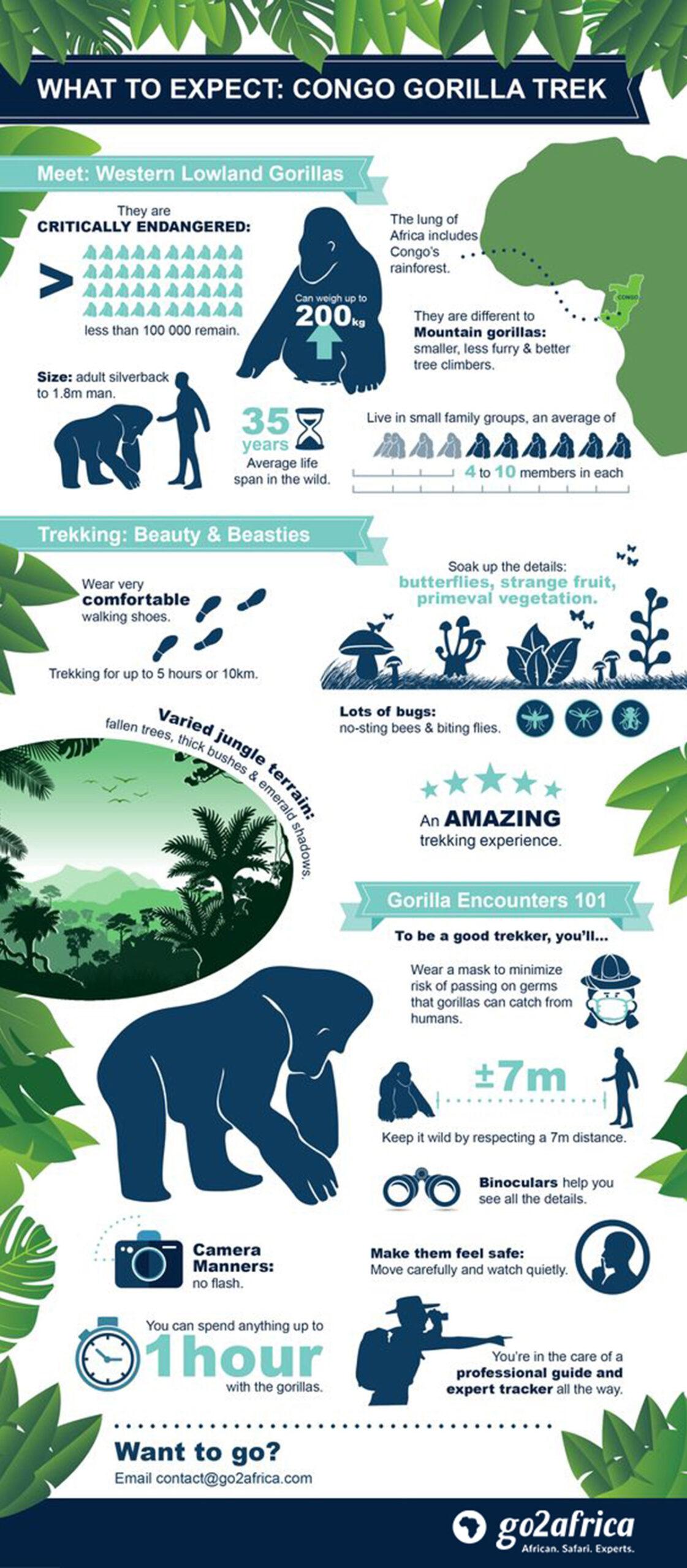 Infographic on gorilla trekking in the Congo (DRC) - Go2Africa